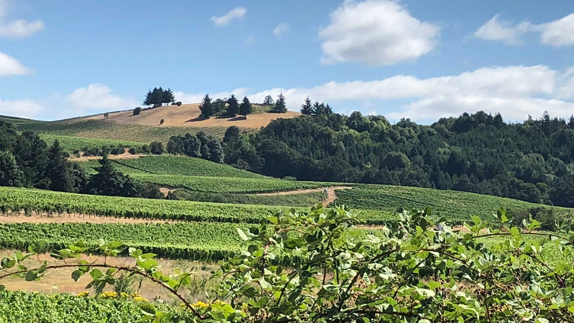Oregon Wine Country Grape Vineyard & Winery